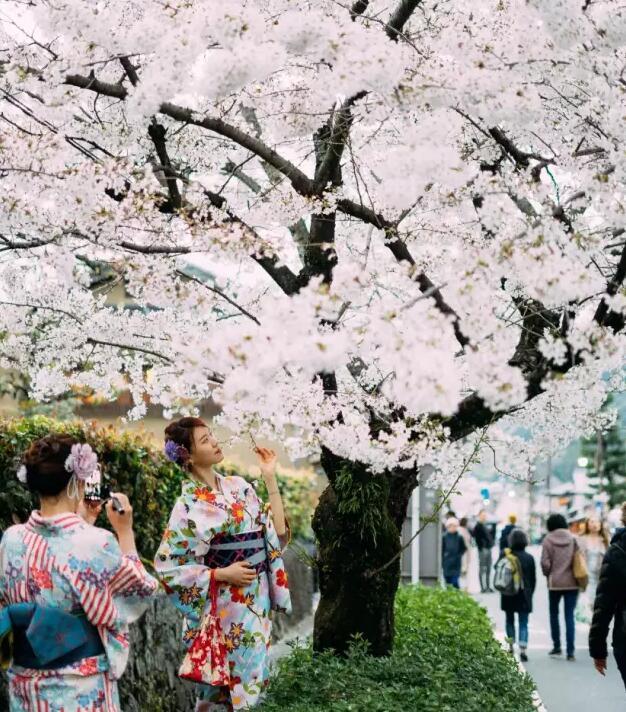 像风一样自由_日本樱花季机票贵吗?日本樱花季酒店机票提前订 日本旅游攻略 ...