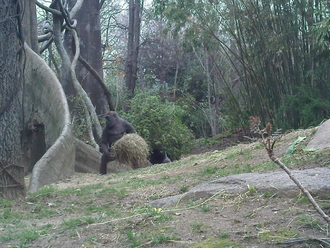 布朗克斯动物园 (bronx zoo)